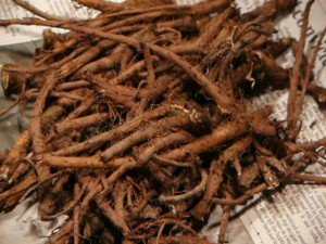 タンポポコーヒーに使う根