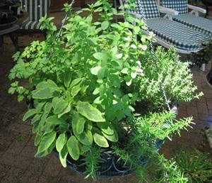 hanging-herb-basket