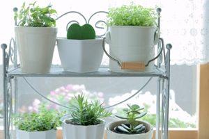 ハーブと観葉植物